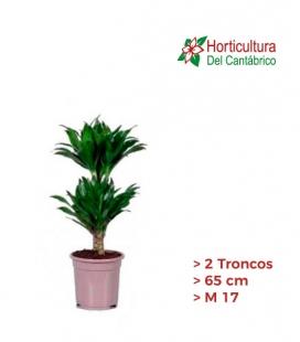 DRAC COMP 2 TRONCOS M17
