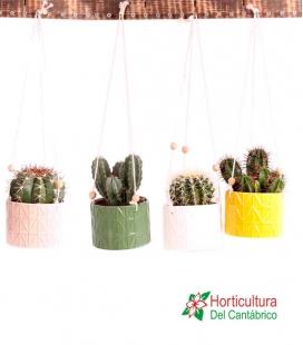Cactus de cerámica colgante