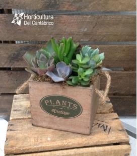 PLANTS VINTAGE CAJA