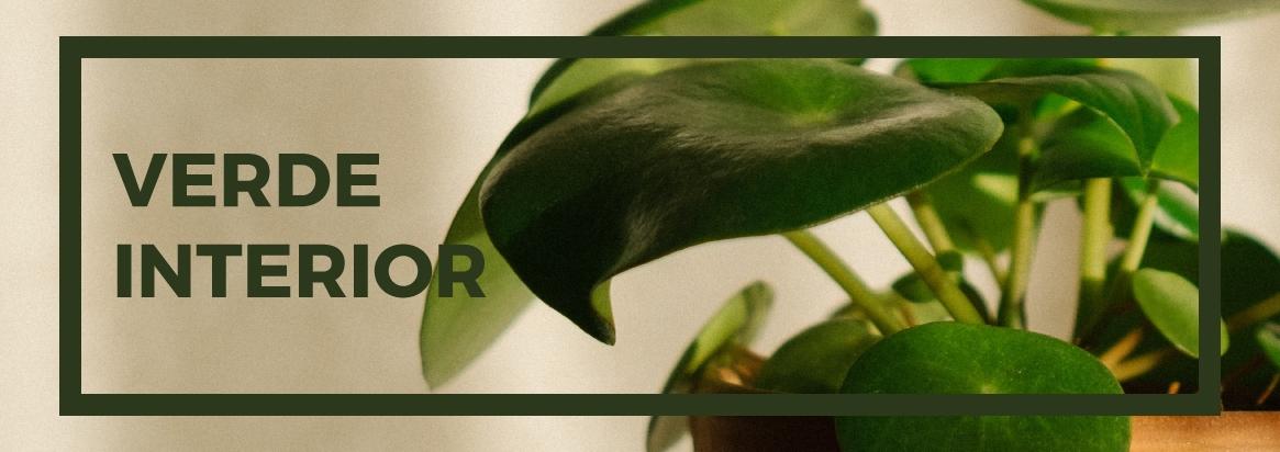 Planta verde para interior