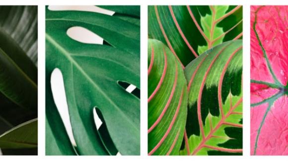 10 plantas de interior que no pueden faltar en tu floristería